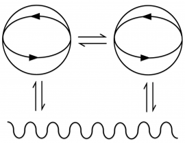 Structural Coupling 3