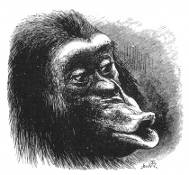 Chimpanzee Reversed Emotions
